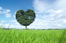 like-a-tree